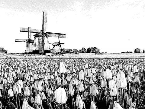Paesi Bassi
