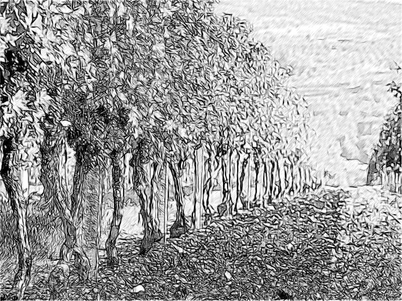Le performance delle società del vino nella Marca trevigiana
