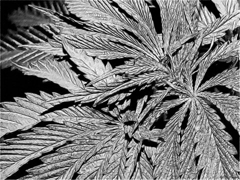 Medical Cannabis regulation slowly advances in Brazil